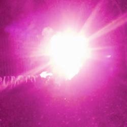 blackboxx starklicht bengalfackel purpur bengalo effektbild1 feuerwerkland shop.de - Feuerwerkland